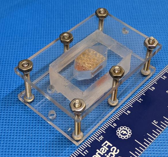 3D printed tissue