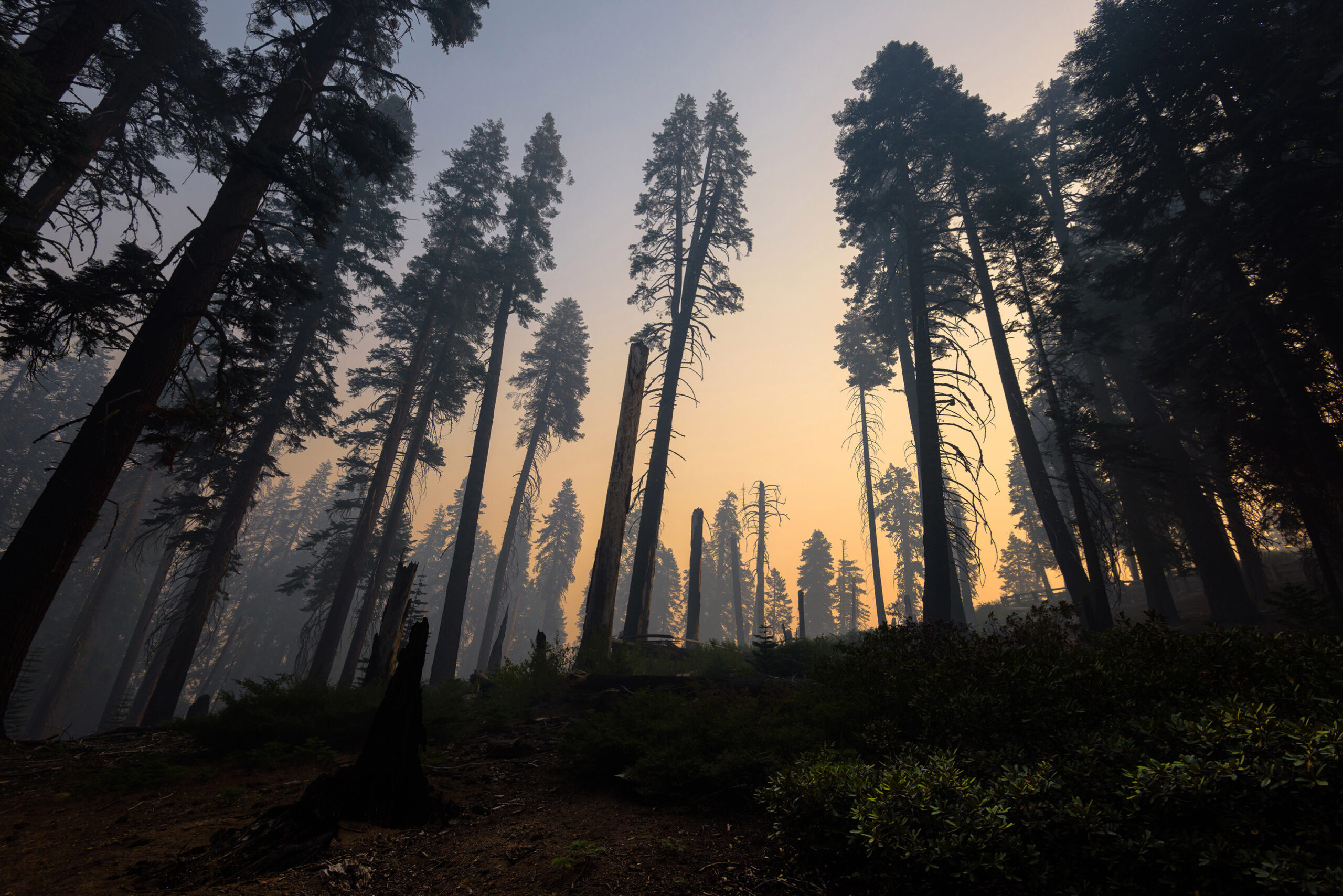 Kings Canyon National Park after a forest fire